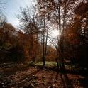 jesień #1