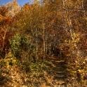 zgub się w lesie