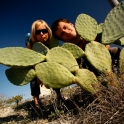 Kaktusy!