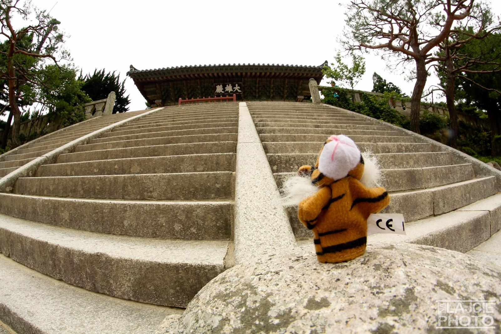 Tygrys dzielnie broni wejścia :)