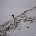 Postanowiliśmy przenieść obóz o godzinę drogi dalej, pod przełęcz Dhampus.