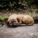 Manali. Groźne bezdomne psy ;)