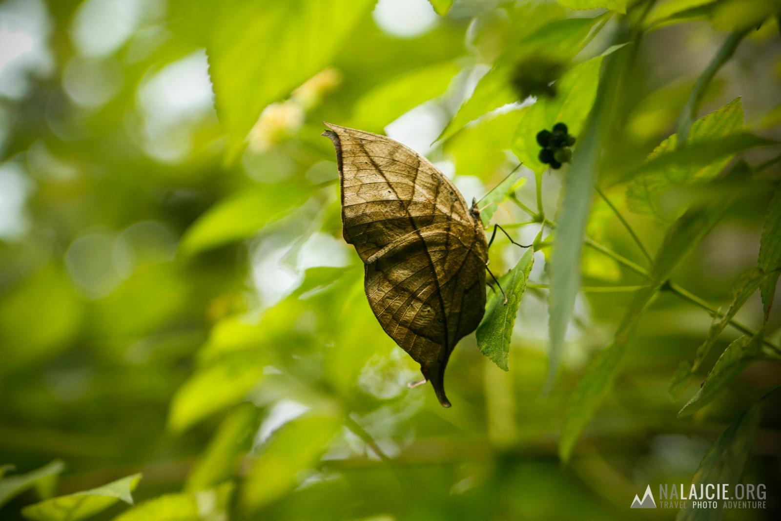A niektóre owady odkryły sztukę mistrzowskiego kamuflażu!