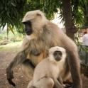 Na drodze otoczyły nas stada małp - aż strach się bać!