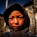 Mały tybetaniec.