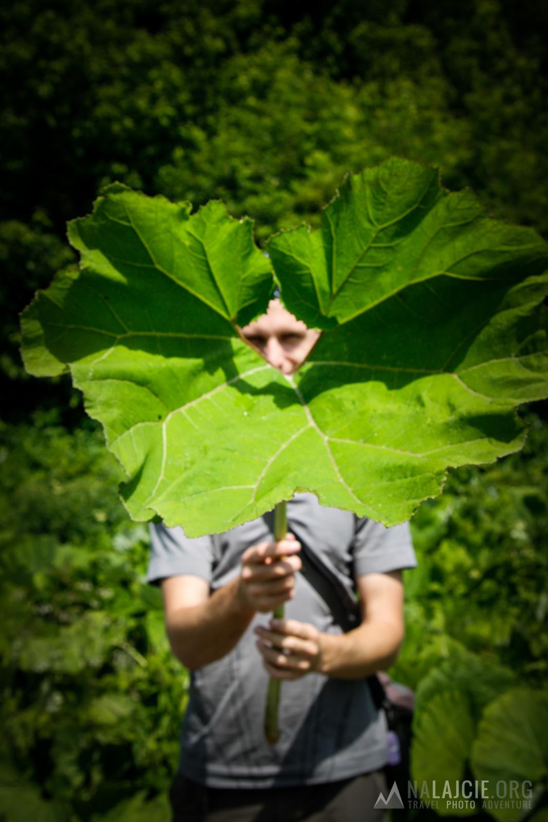 Dostał (z) liścia...