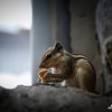 Wiewiórką smakowały nasze suchary!