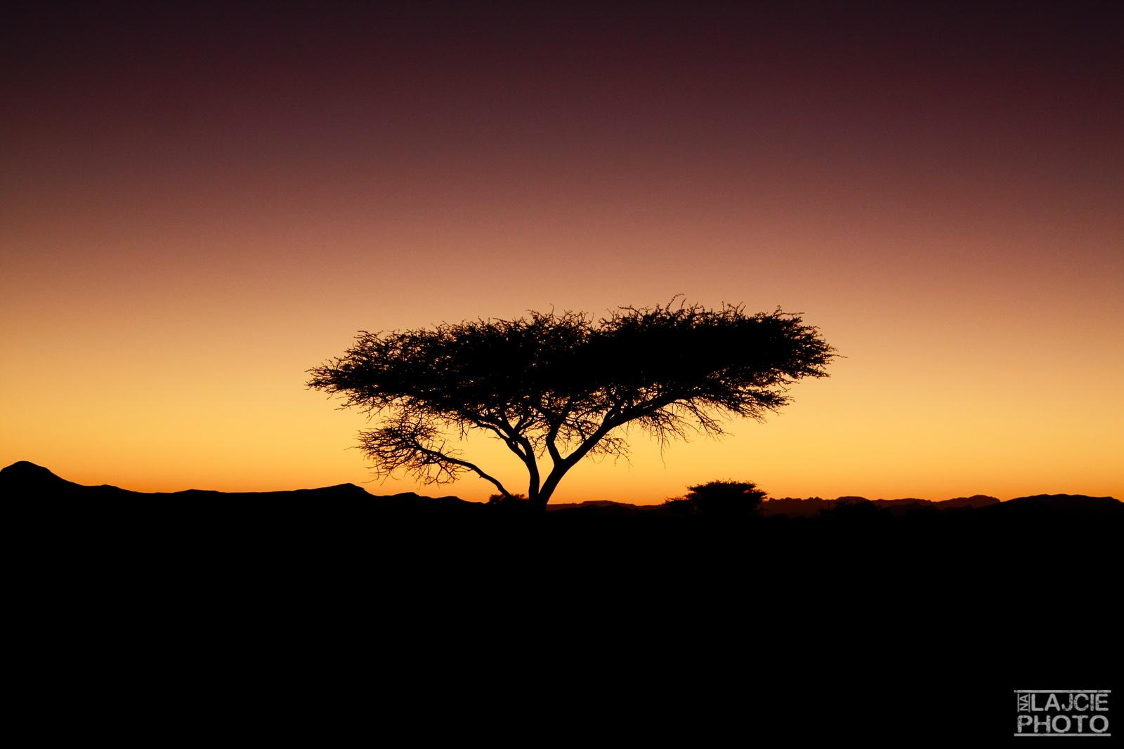 no, w końcu widać, że jesteśmy w Afryce