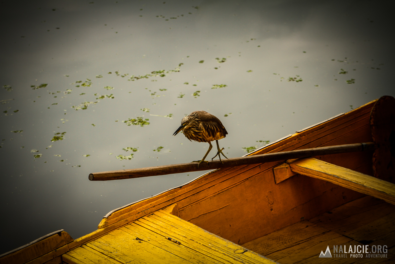 Ptaki od samego rana polują na ryby.