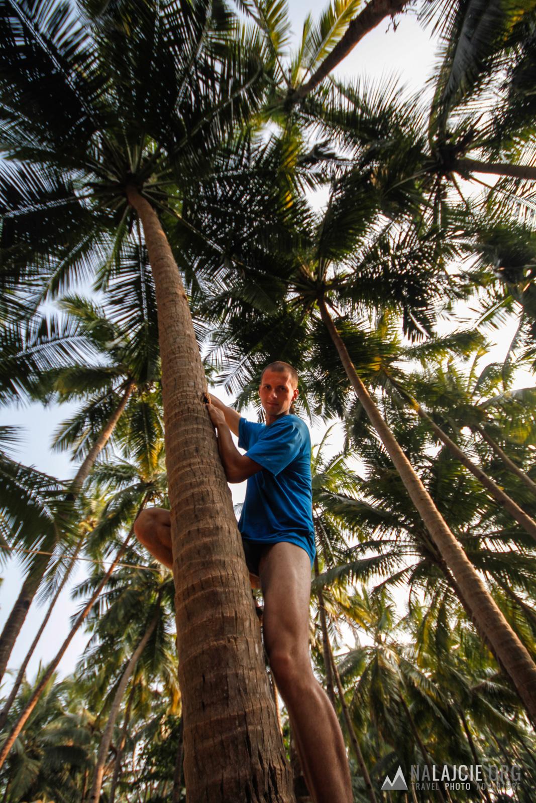 A my idziemy na kokosy!