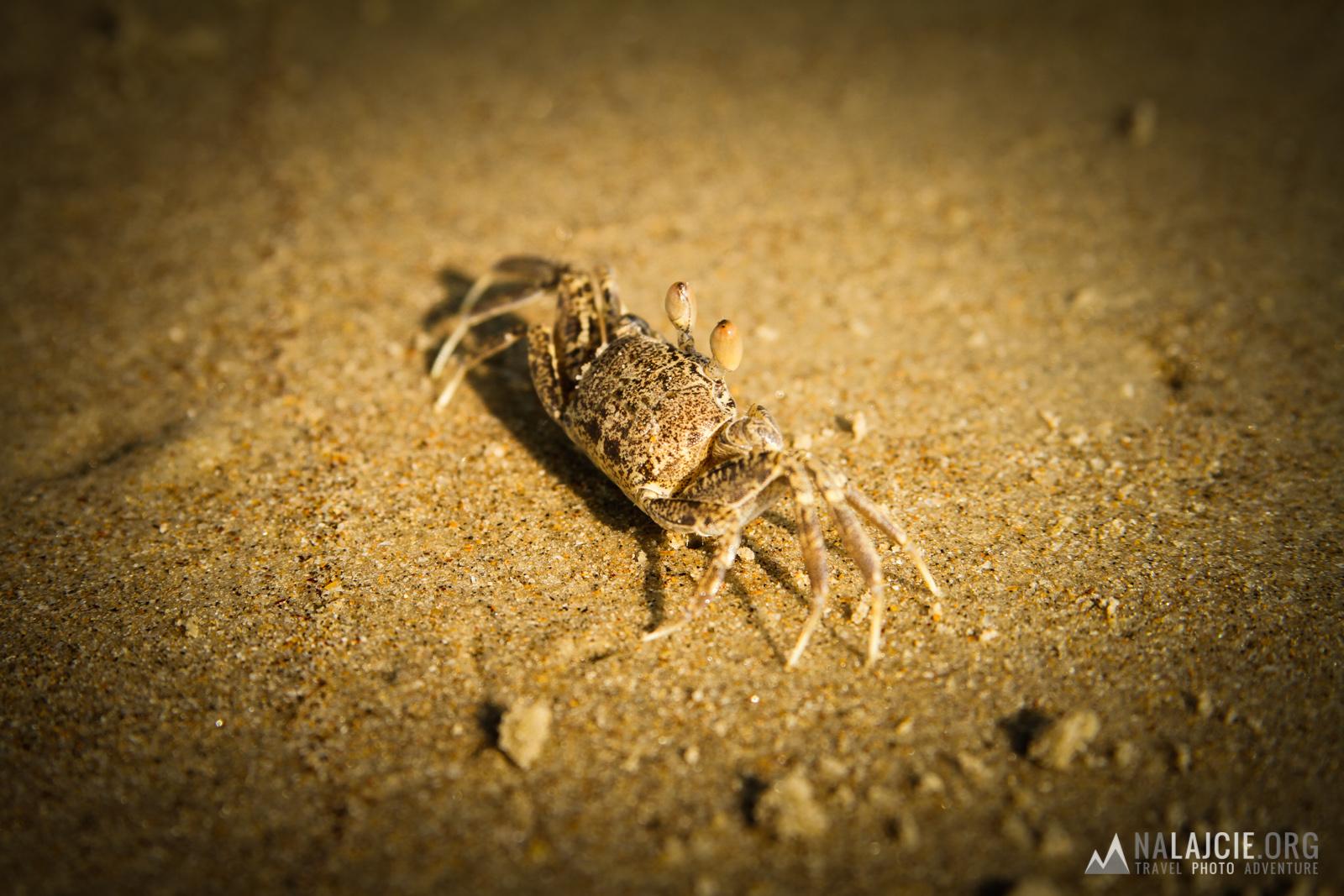 A po plaży biegają kraby!