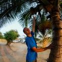 Nawet jeśli kokosy pozostają nieosiągalne!