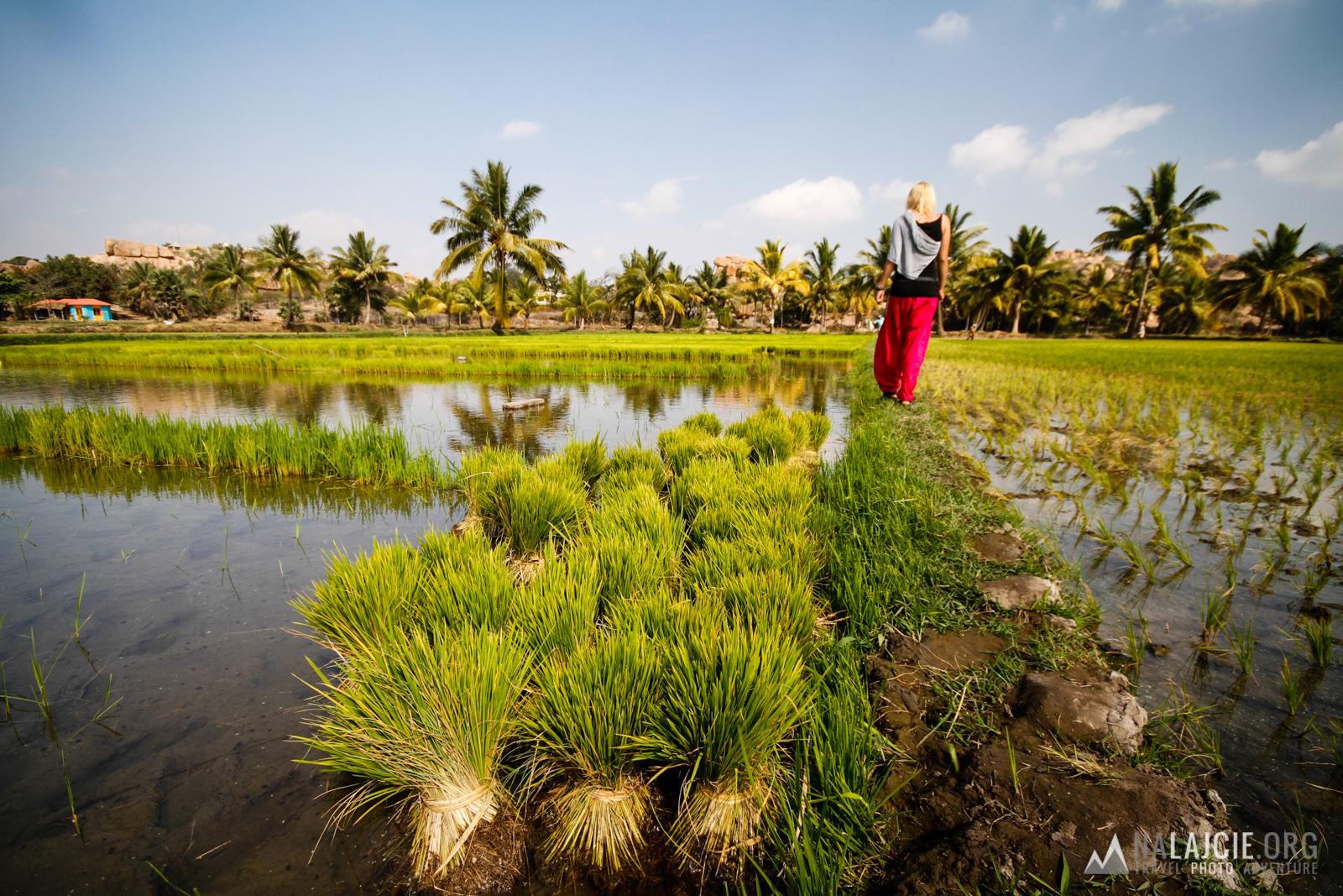 Obchodzimy pola ryżowe.