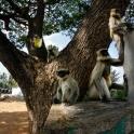 W Hampi Bazar witają nas stada małp.