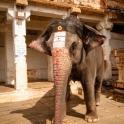 A tu tresowany słoń!