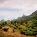 Schodzimy do najwyżej położonych na świecie plantacji herbaty.
