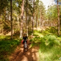 Szlakiem po lesie.