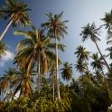 Palmowy gaj.