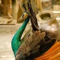 Ptaki egzotyczne ;)